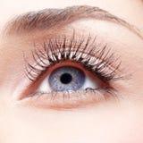 красивейшие детеныши женщины голубого глаза Стоковое фото RF