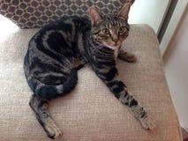 красивейшие детеныши кота Стоковые Фото