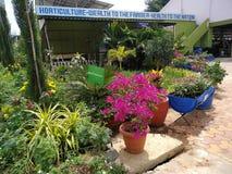 Красивейшие заводы цветка стоковая фотография rf