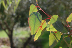 красивейшие листья зеленого цвета Стоковое фото RF