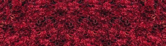 красивейшие красные розы Стена цветка Конец-вверх огромных красных роз установьте текст стоковые фото