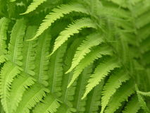 красивейшие листья Стоковое Изображение