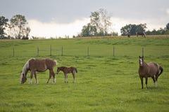 красивейшие лошади стоковые изображения rf