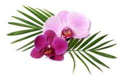 красивейшие орхидеи Стоковые Фотографии RF