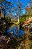Красивейшие отражения деревьев Кипр зимы на заводи Гамильтона Стоковые Фотографии RF