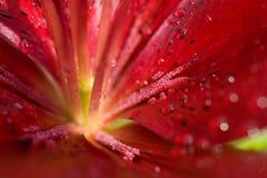 красивейшие падения цветут красная вода стоковые фотографии rf