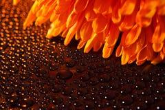 красивейшие падения цветут померанцовая вода Стоковая Фотография RF