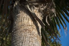 красивейшие пальмы Стоковое Изображение RF