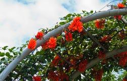 Красивейшие померанцовые цветки. Стоковые Фото