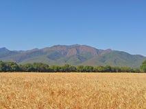 Красивейшие поля Стоковое Изображение RF