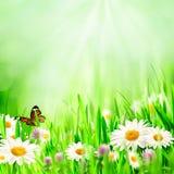 Красивейшие предпосылки весны бесплатная иллюстрация