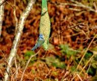 Красивейшие птицы стоковые изображения