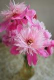 Красивейшие розовые цветки Стоковая Фотография RF