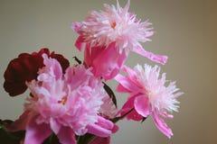Красивейшие розовые цветки Стоковые Фото