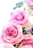 красивейшие розы граници Стоковое Изображение