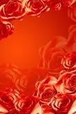 красивейшие розы красного цвета рамки Стоковое фото RF
