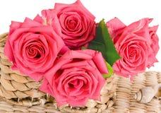 красивейшие розы Стоковые Изображения