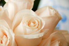 красивейшие розы Стоковые Фотографии RF