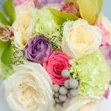 красивейшие розы Стоковое фото RF