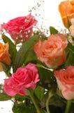 красивейшие розы Стоковое Фото