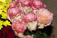 красивейшие розы стоковое изображение