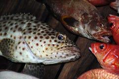 красивейшие рыбы тропические Стоковое Фото