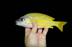 красивейшие рыбы тропические Стоковое Изображение