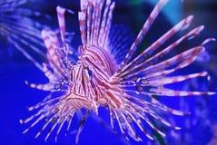 красивейшие рыбы Стоковое фото RF