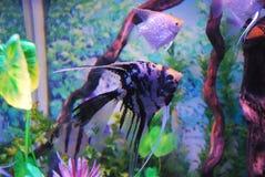 красивейшие рыбы Стоковые Фотографии RF