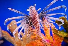 красивейшие рыбы Стоковое Фото