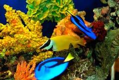 красивейшие рыбы Стоковые Изображения RF