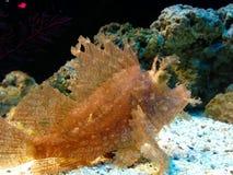 красивейшие рыбы Стоковые Фото