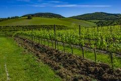 красивейшие рядки жать виноградин Земля виноградника весной стоковая фотография