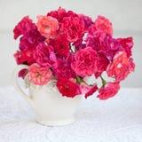 красивейшие свежие розы Стоковое Изображение