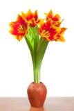 красивейшие тюльпаны бака глины Стоковые Фотографии RF