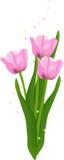 красивейшие тюльпаны иллюстрация штока