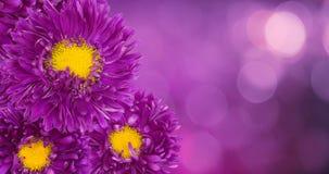 красивейшие флористические обои Стоковое Изображение