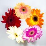 красивейшие цветастые цветки стоковая фотография