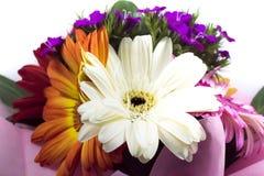 красивейшие цветастые цветки стоковая фотография rf