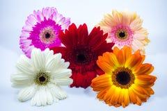 красивейшие цветастые цветки стоковые изображения rf