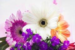 красивейшие цветастые цветки стоковое фото