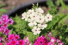 красивейшие цветки белые стоковые фото
