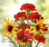 Красивейшие цветки в саде Стоковое Изображение