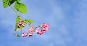 красивейшие цветки граници Стоковые Фото