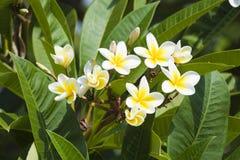 красивейшие цветки Израиль Стоковые Изображения