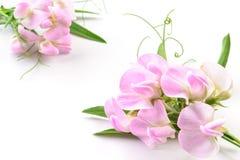 красивейшие цветки иллюстрация конструкции карточки предпосылки фона флористическая Стоковое фото RF