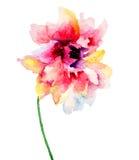 красивейшие цветки красные иллюстрация штока