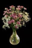 Красивейшие цветки на черноте Стоковое Изображение RF