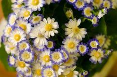 красивейшие цветки одичалые Стоковое фото RF