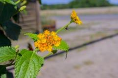 красивейшие цветки померанцовые Стоковые Изображения RF